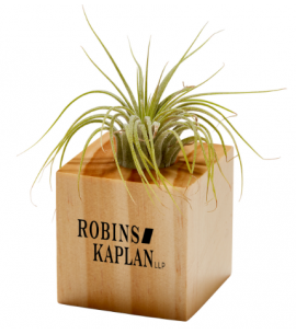Air Plant | Easy Care Indoor Plant