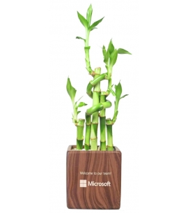 Lucky Bamboo in Rectangle Vase | 5 Stalks