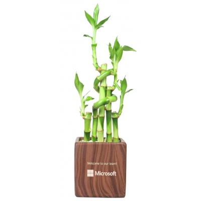 Lucky Bamboo In Rectangle Vase 5 Stalks Eco Promotional Products